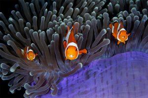 La faune de notre planète en photos