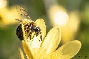 [Calais] Exposition sur les Pollinisateurs