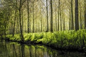 Marais et lagunes à l'honneur