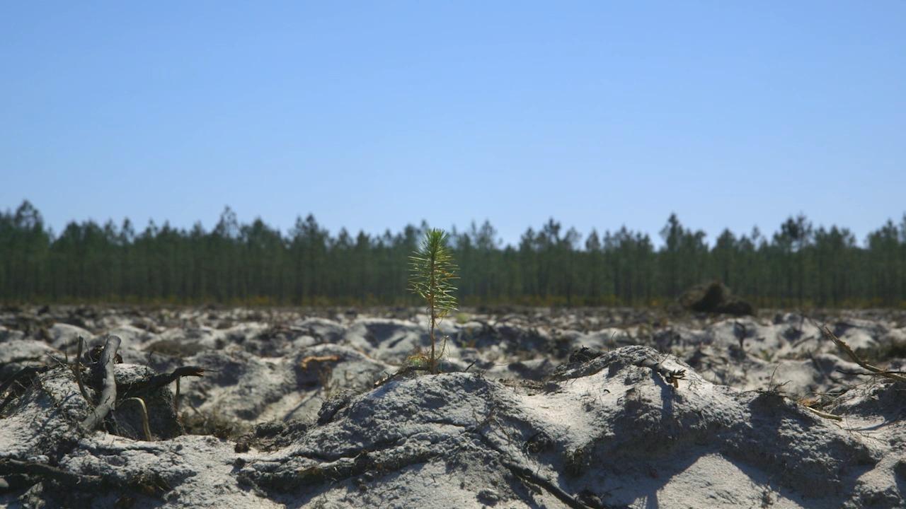 [Projection] Le temps des forêts – Découvrez le bilan national du Mois du film doc !