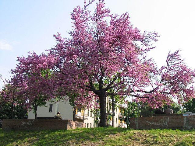 Le festival de l'arbre